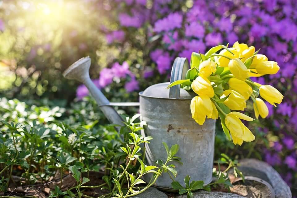 Így alakíts ki vízbarát kertet!